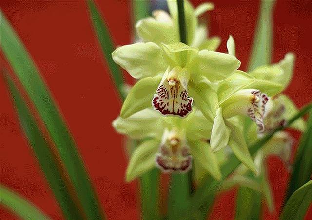 Top 5 loài hoa đắt đỏ nhất hành tinh - Ảnh 3.