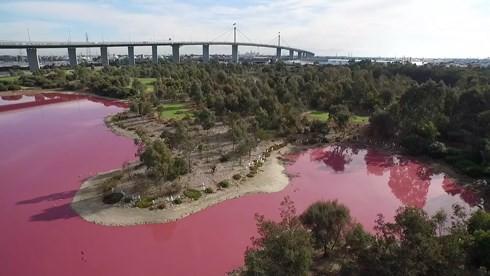 Bí ẩn hồ nước lạ chuyển màu hồng, ùn ùn người kéo đến chụp ảnh - Ảnh 2.