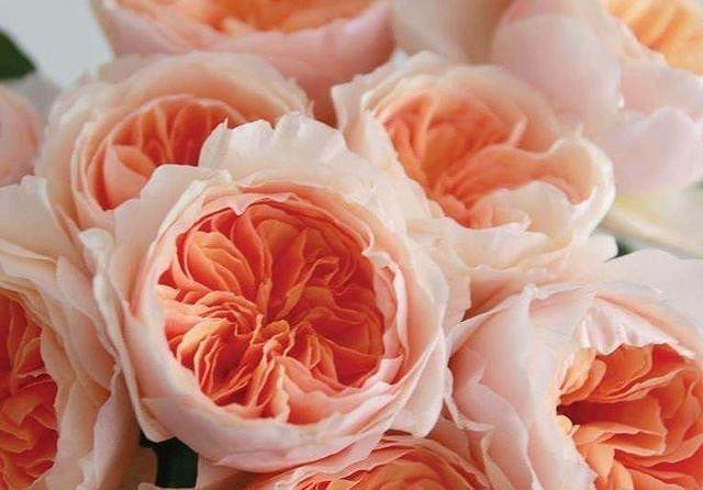 Top 5 loài hoa đắt đỏ nhất hành tinh - Ảnh 4.
