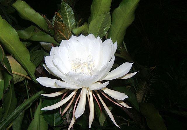 Top 5 loài hoa đắt đỏ nhất hành tinh - Ảnh 6.