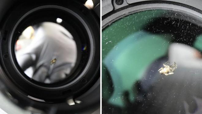 Một con ruồi chui vào ống kính camera 40 triệu, khổ chủ méo mặt mất thêm 9 triệu tiền sửa - Ảnh 2.