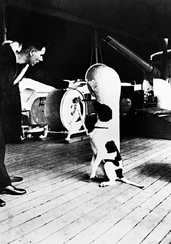 Những người lính bốn chân: Cô chó Judy, tù binh chiến tranh đặc biệt của Thế Chiến thứ Hai - Ảnh 1.