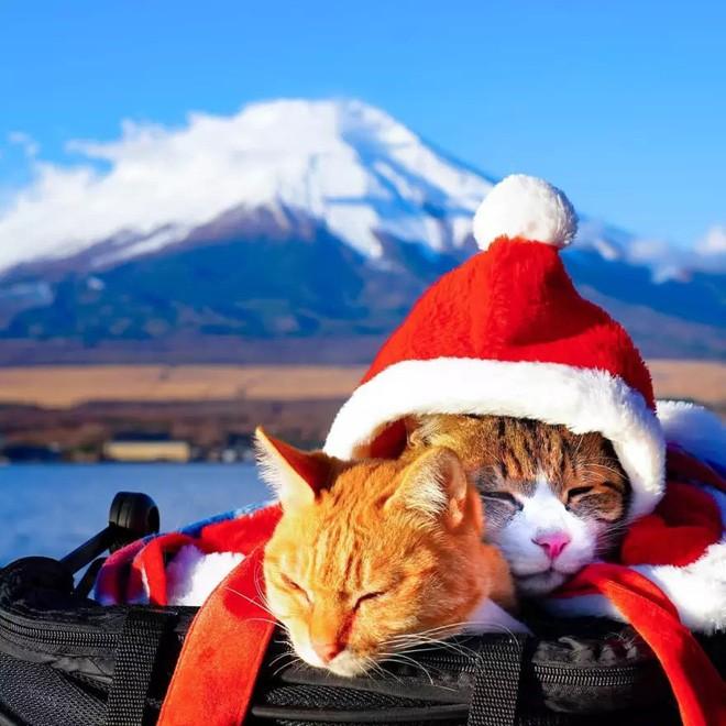 Dân mạng phát hờn với 2 boss mèo được vác đi khắp Nhật Bản: Cảnh đẹp như mơ mà chỉ lo ngáp với ngủ - Ảnh 1.