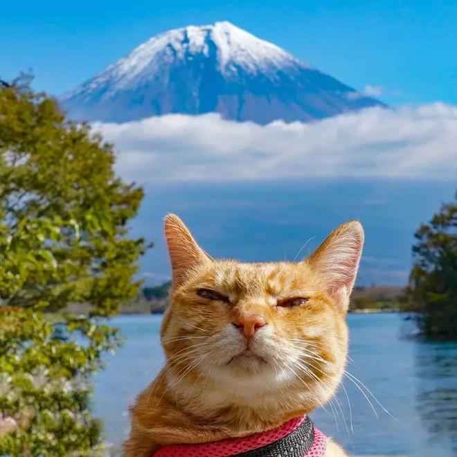 Dân mạng phát hờn với 2 boss mèo được vác đi khắp Nhật Bản: Cảnh đẹp như mơ mà chỉ lo ngáp với ngủ - Ảnh 12.
