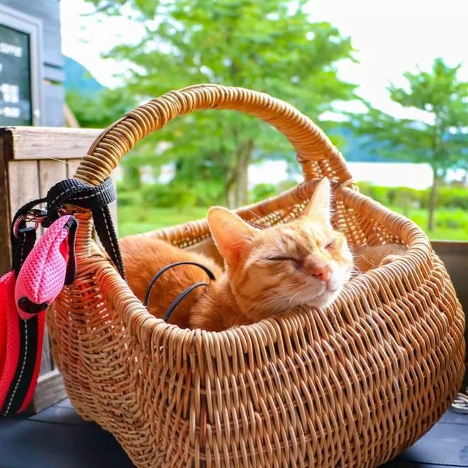 Dân mạng phát hờn với 2 boss mèo được vác đi khắp Nhật Bản: Cảnh đẹp như mơ mà chỉ lo ngáp với ngủ - Ảnh 14.