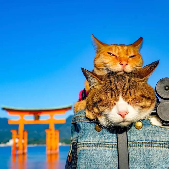 Dân mạng phát hờn với 2 boss mèo được vác đi khắp Nhật Bản: Cảnh đẹp như mơ mà chỉ lo ngáp với ngủ - Ảnh 5.