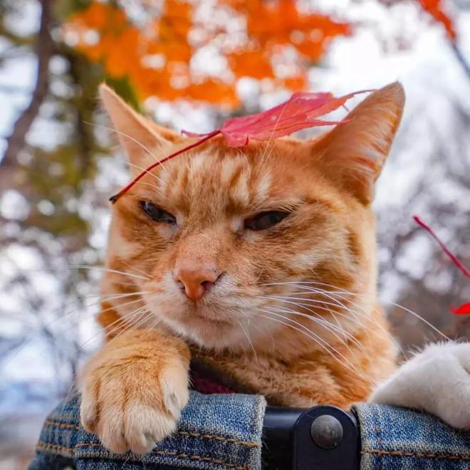 Dân mạng phát hờn với 2 boss mèo được vác đi khắp Nhật Bản: Cảnh đẹp như mơ mà chỉ lo ngáp với ngủ - Ảnh 6.