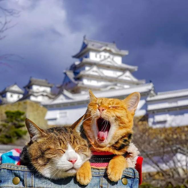 Dân mạng phát hờn với 2 boss mèo được vác đi khắp Nhật Bản: Cảnh đẹp như mơ mà chỉ lo ngáp với ngủ - Ảnh 7.
