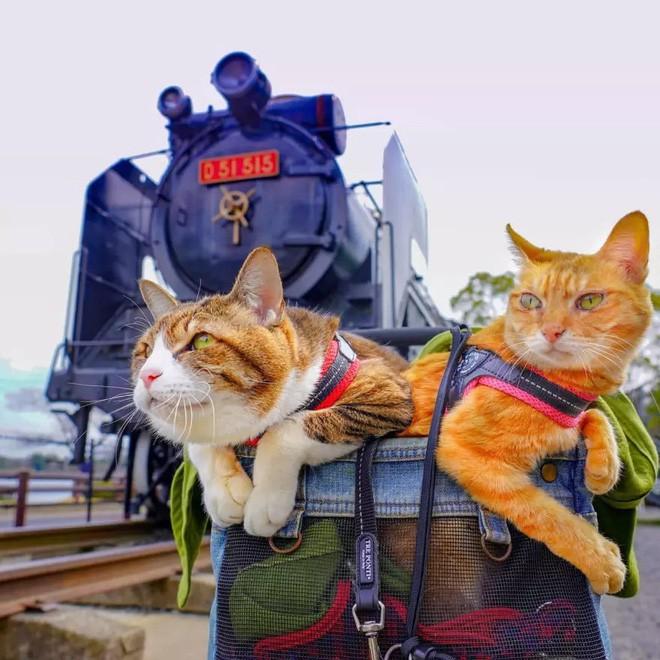 Dân mạng phát hờn với 2 boss mèo được vác đi khắp Nhật Bản: Cảnh đẹp như mơ mà chỉ lo ngáp với ngủ - Ảnh 8.