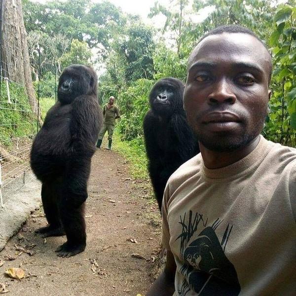 Khỉ đột tạo dáng như người trong bức ảnh selfie gây bão mạng - Ảnh 1.