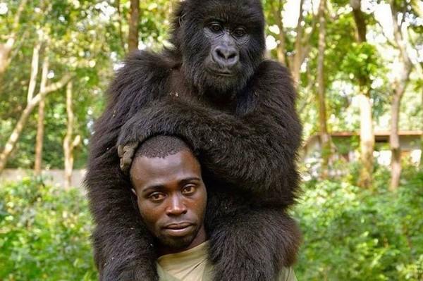 Khỉ đột tạo dáng như người trong bức ảnh selfie gây bão mạng - Ảnh 4.