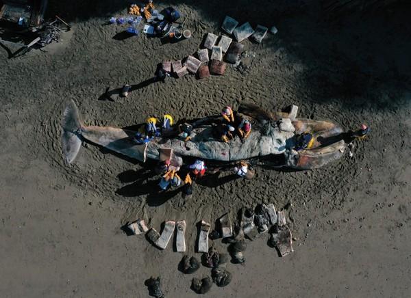 Bí ẩn đằng sau cái chết của hàng chục con cá voi xám với bụng trống rỗng - Ảnh 1.