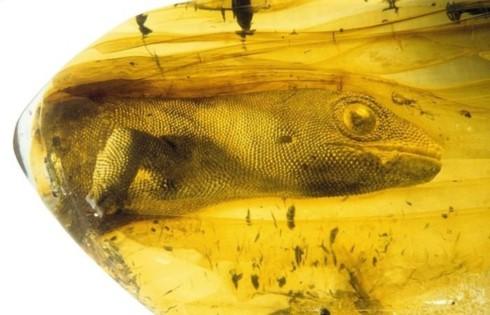 Những bức ảnh kỳ thú chứng minh tự nhiên muôn vàn bí ẩn - Ảnh 17.