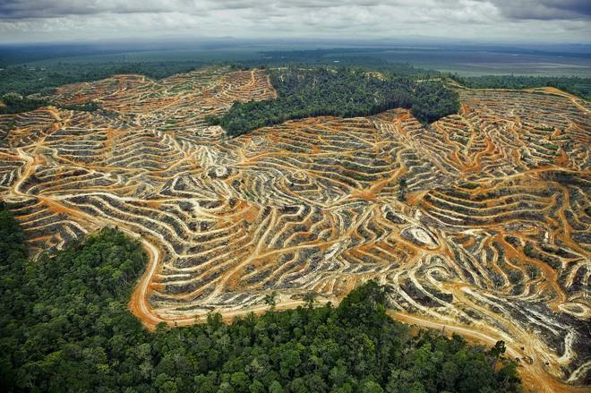 Cần gấp rút trả lại 50% đất đai cho tự nhiên thì mới mong chặn được thảm họa khí hậu đang xảy ra - Ảnh 1.