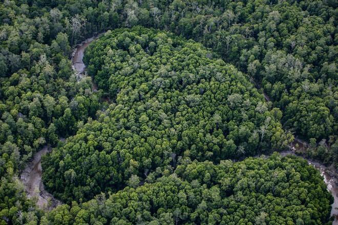 Cần gấp rút trả lại 50% đất đai cho tự nhiên thì mới mong chặn được thảm họa khí hậu đang xảy ra - Ảnh 10.