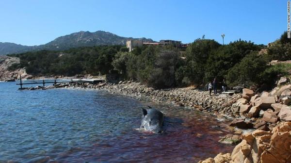 Phát hiện gây sốc trong bụng xác cá voi mang thai dài 8 m trôi dạt vào bờ biển - Ảnh 4.