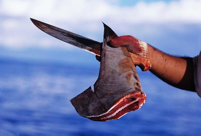 Câu cá mập ở Trường Sa - Ảnh 5.