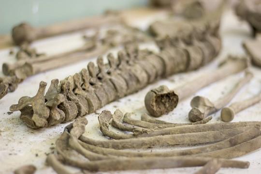 Đào phải hàng trăm ngôi mộ cổ khi làm móng xây chung cư - Ảnh 5.