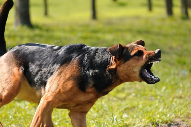 Cách xử lý khi bất ngờ gặp chó dữ trên đường - Ảnh 2.