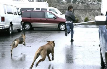 Cách xử lý khi bất ngờ gặp chó dữ trên đường - Ảnh 3.
