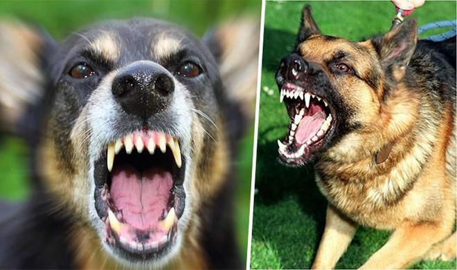 Cách xử lý khi bất ngờ gặp chó dữ trên đường - Ảnh 7.