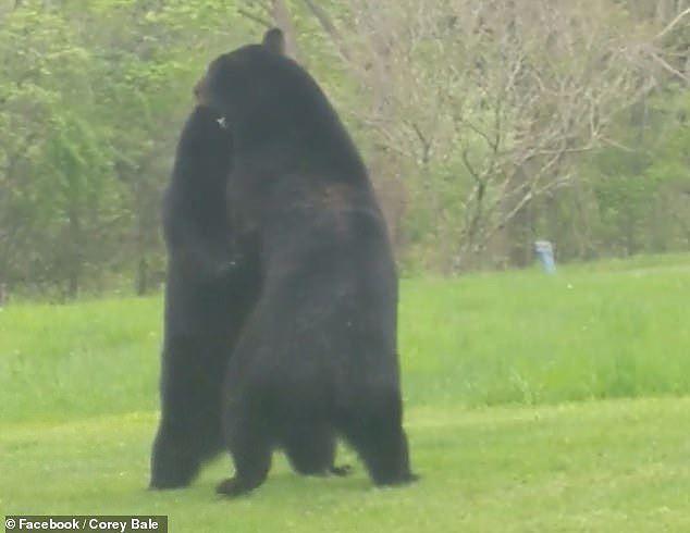 Thích thú hình ảnh hai con gấu đen hỗn chiến như đang cãi nhau - Ảnh 5.
