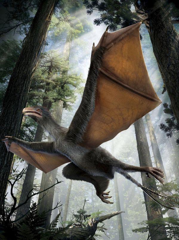 Phát hiện hoá thạch khủng long có cánh tại Trung Quốc - Ảnh 3.