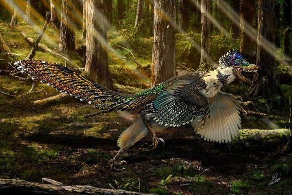 Phát hiện hoá thạch khủng long có cánh tại Trung Quốc - Ảnh 8.