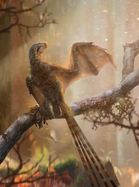 Phát hiện hoá thạch khủng long có cánh tại Trung Quốc - Ảnh 6.