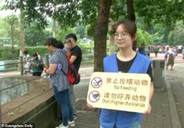 Ham ăn đồ ăn của du khách, đám gấu mèo ở sở thú Trung Quốc bỗng phát phì, giảm hẳn khả năng sinh sản - Ảnh 10.