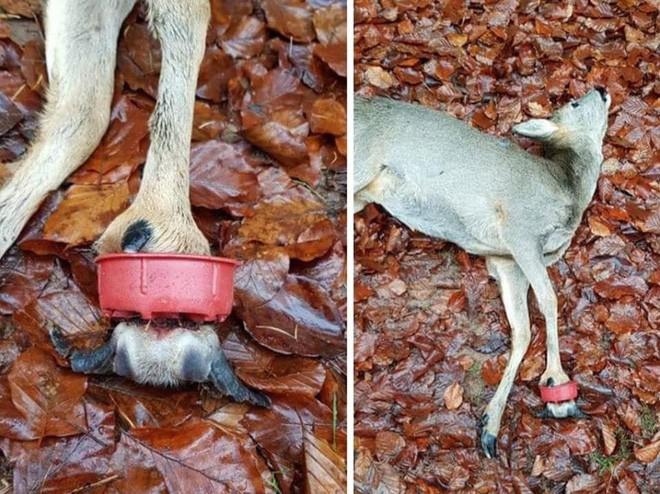 Những hình ảnh gây sốc về hậu quả của rác thải nhựa, ô nhiễm môi trường với thế giới tự nhiên - Ảnh 3.