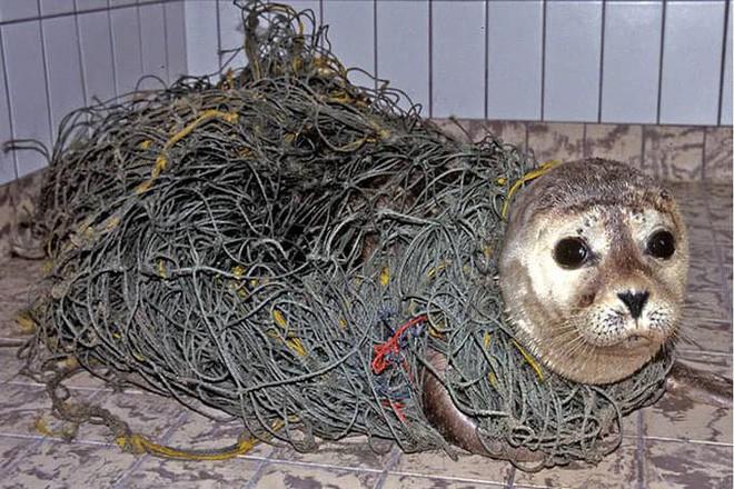 Những hình ảnh gây sốc về hậu quả của rác thải nhựa, ô nhiễm môi trường với thế giới tự nhiên - Ảnh 6.