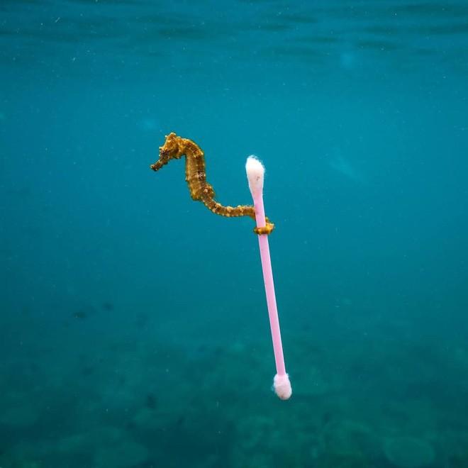 Những hình ảnh gây sốc về hậu quả của rác thải nhựa, ô nhiễm môi trường với thế giới tự nhiên - Ảnh 10.