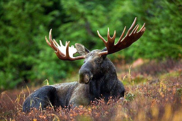 Top 10 loài động vật có bề ngoài vô hại nhưng cực kỳ nguy hiểm (Phần 1) - Ảnh 1.