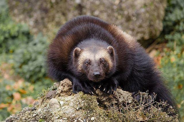 Top 10 loài động vật có bề ngoài vô hại nhưng cực kỳ nguy hiểm (Phần 1) - Ảnh 2.