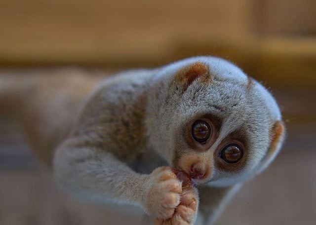 Top 10 loài động vật có bề ngoài vô hại nhưng cực kỳ nguy hiểm (Phần 1) - Ảnh 4.