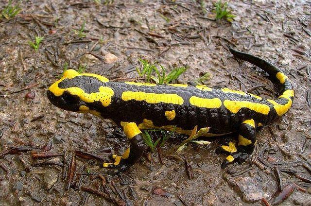 Top 10 loài động vật có bề ngoài vô hại nhưng cực kỳ nguy hiểm (Phần 1) - Ảnh 5.