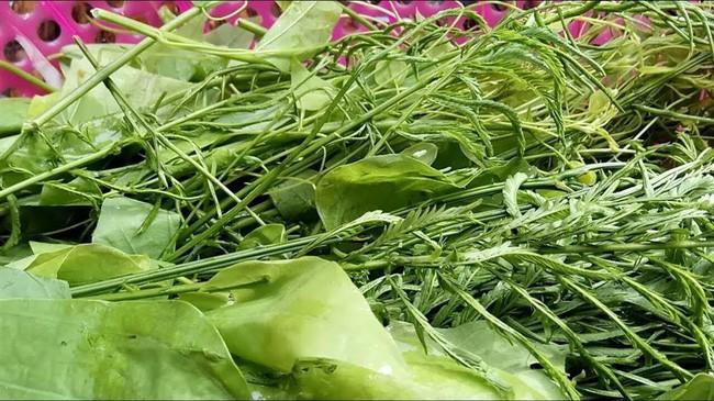 Đặc sản thịt thối lúc nhúc giòi ở Sơn La: Giòi càng nhiều món càng được khen ngon, lễ Tết đám cưới nhà nào cũng nấu - Ảnh 3.