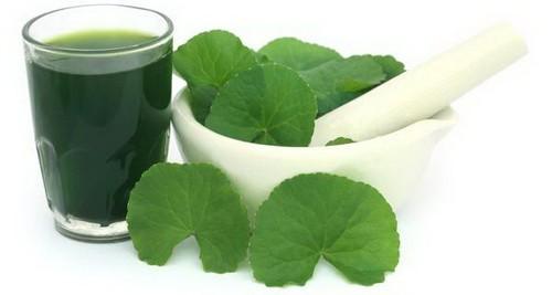 Rau má - Món quà quý từ thiên nhiên tốt cho bệnh nhân xơ cứng bì - Ảnh 2.