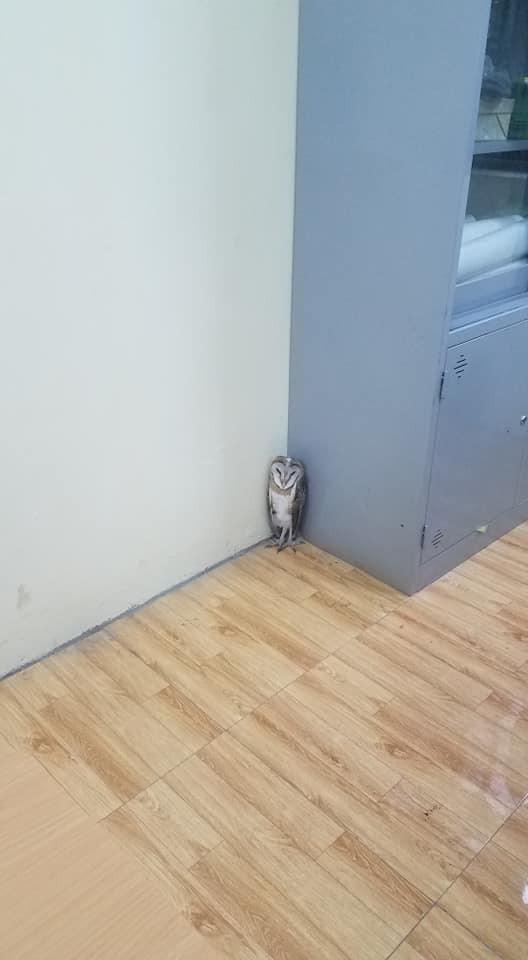 Chim cú lợn bay nhầm vào lớp học: Được phong làm giám thị, thậm chí, học sinh ví như thú cưng trong Harry Potter - Ảnh 3.
