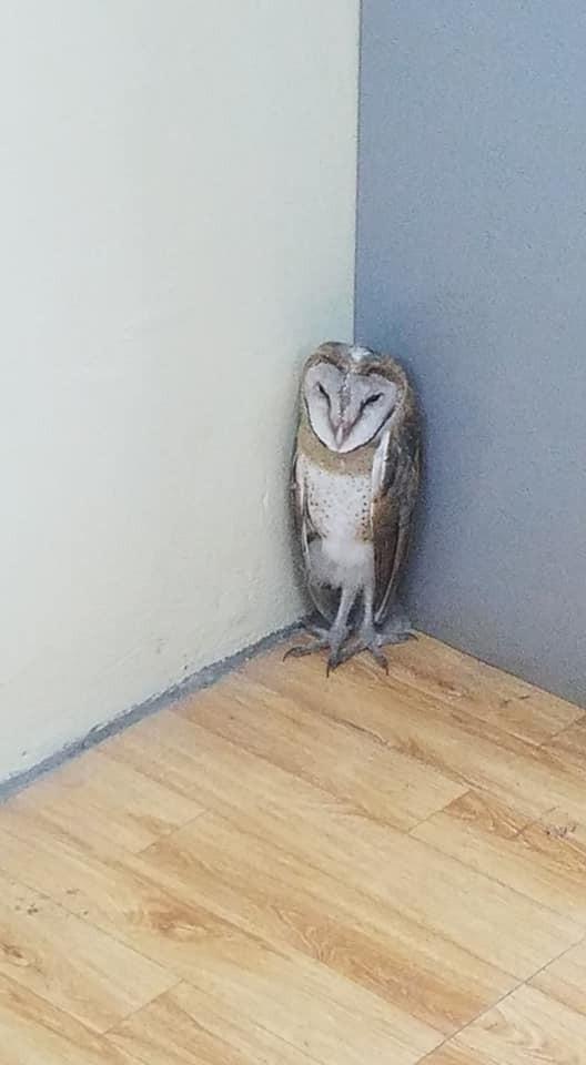 Chim cú lợn bay nhầm vào lớp học: Được phong làm giám thị, thậm chí, học sinh ví như thú cưng trong Harry Potter - Ảnh 4.
