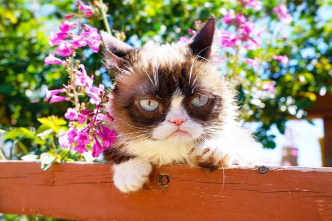 Grumpy Cat - cô mèo cáu kỉnh nhất thế giới với hơn 8 triệu người theo dõi đã qua đời - Ảnh 7.