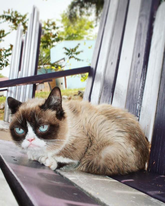 Grumpy Cat - cô mèo cáu kỉnh nhất thế giới với hơn 8 triệu người theo dõi đã qua đời - Ảnh 8.