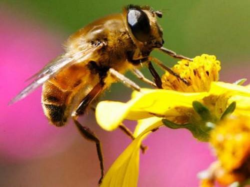 Mật ong - linh đơn kéo dài thanh xuân - Ảnh 1.
