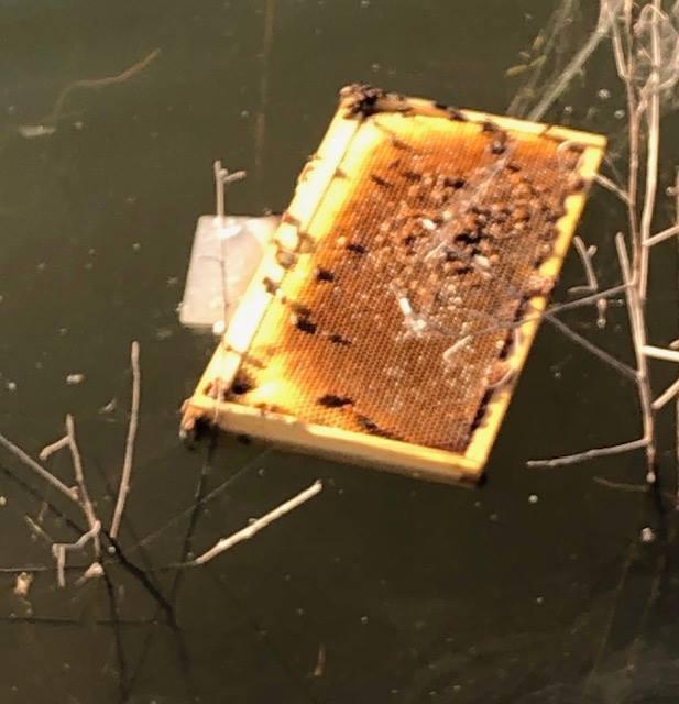Ong mật trên thế giới ngày càng giảm và vừa có thêm nửa triệu con bị thiêu chết - Ảnh 2.