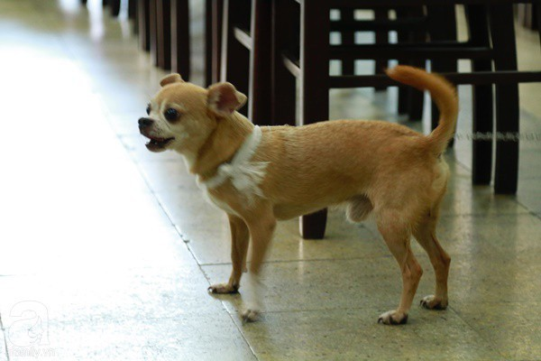 Rơi nước mắt với hình ảnh chú cún nhỏ buộc khăn tang trắng, quanh quẩn không rời bên linh cữu cố nghệ sĩ Lê Bình  - Ảnh 3.