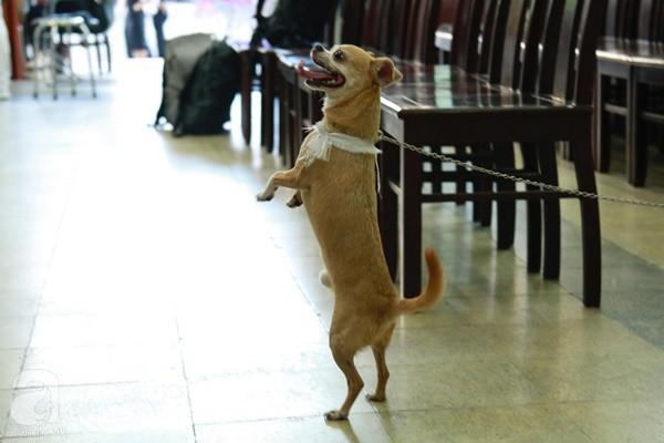 Rơi nước mắt với hình ảnh chú cún nhỏ buộc khăn tang trắng, quanh quẩn không rời bên linh cữu cố nghệ sĩ Lê Bình  - Ảnh 7.