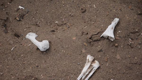 Ngạc nhiên chưa? Ai Cập không phải là nơi có những xác ướp cổ nhất trên thế giới! - Ảnh 12.