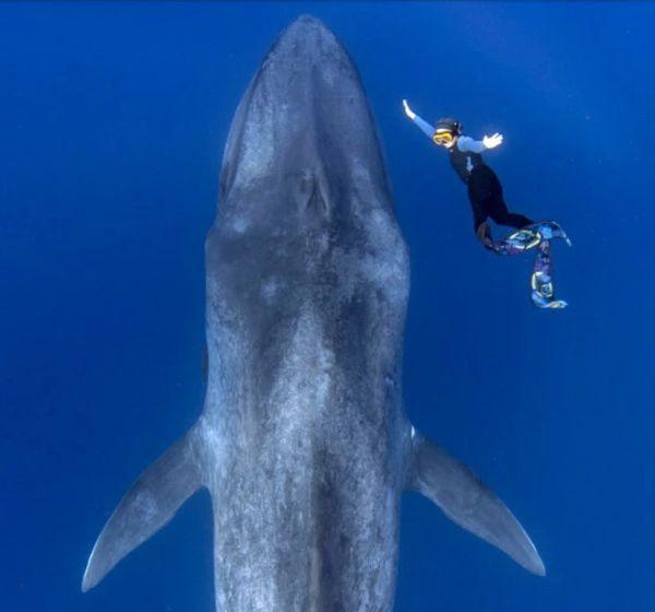 Cuộc chạm trán giữa thợ lặn và cá voi xanh hơn 30 mét trong những bức hình tuyệt đẹp - Ảnh 1.