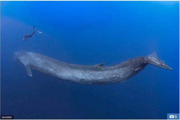 Cuộc chạm trán giữa thợ lặn và cá voi xanh hơn 30 mét trong những bức hình tuyệt đẹp - Ảnh 3.